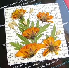 Orange pressed flower magnet, Orange brite lites cosmos, Square shape, Botanical magnet, Real dried flowers, Clear acrylic, Fridge magnet