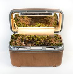 Traveling Landscapes: Miniature Ecosystems Tucked Inside Vintage Suitcases by Kathleen Vance | Colossal