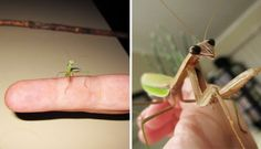 Here's The Sweetest Little Story About A Person Parenting A Bug  For the love of animals. Pass it on.