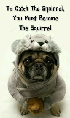 Pugs Who Just Want Halloween To Be Over So not gonna happen. Squirrels go up trees and pugs just think they disappeared.So not gonna happen. Squirrels go up trees and pugs just think they disappeared. Funny Animal Memes, Dog Memes, Cute Funny Animals, Funny Cute, Funny Dogs, Hilarious, Perros Bull Terrier, Bull Terriers, Baby Animals