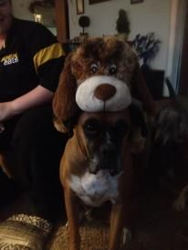 Bruiser and his puppy