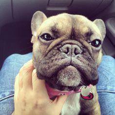 Sweet puppy Lola