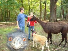 photobombs drôles d'animaux
