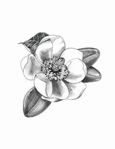 Magnolia Flower in Graphite Pencil - Original - Zeichnen - Gothic
