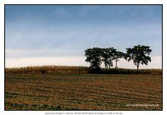 Trees #petermarbaise #tuxoche