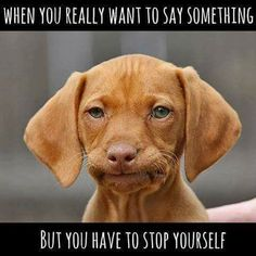 Check out: Animal Memes - Disapproving doggie. One of our funny daily memes selection. We add new funny memes everyday! Bookmark us today and enjoy some slapstick entertainment! Funny Dogs, Funny Animals, Cute Animals, Funny Memes, Dog Memes, Memes Humor, Dog Humor, Animal Memes, Humour Quotes