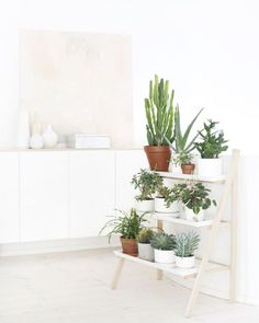 Cactussen in je interieur | Woonguide.nl