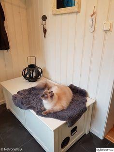 Inbyggd kattlåda - Hemma hos Petronellas Cat Stuff, Cool Cats, Home Appliances, Home Decor, House Appliances, Kitchen Appliances, Decoration Home, Room Decor, Appliances