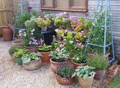 Image result for container cottage garden