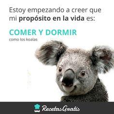 Comer y dormir #RecetasGratis #FrasesDivertidas #Expresiones #Meme #Quotes #FrasessobreComida #FrasedelDía #HumorenEspañol #Gordos