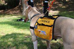 Cadence loves her backpack. | Flickr: partage de photos!