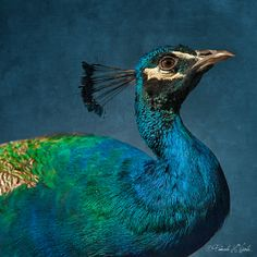 Peacock Blue~love this color for accent color in dining room and splashes throughout