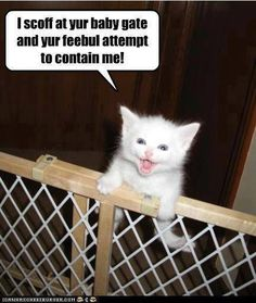 Lolcats - climb - lol at funny cat memes - funny cat pictures with Funny Animal Pictures, Cute Funny Animals, Cute Baby Animals, Cute Cats, Silly Cats, Crazy Cats, Funny Cat Memes, Funny Cats, Hilarious