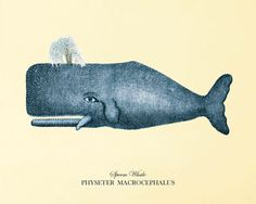 Blue Whale art print antique prints Sea art by AntiqueWallArt, $10.00