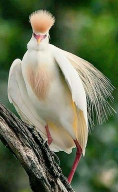 Best Pic beautiful birds of prey Tips Like a wildlife with feed shooter, a vey important difficulty nearly all criticize in relation to will be the Rare Birds, Exotic Birds, Colorful Birds, Pretty Birds, Beautiful Birds, Animals Beautiful, Nature Animals, Animals And Pets, Funny Birds