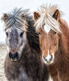 What do you do when a horse has a better hair day than you EVER will?  #horsesofinstagram #beautiful #hairgoals