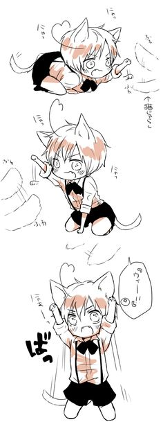 Hey look it's Romano cat! Somebody find Spain!!