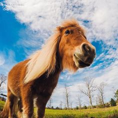 Charley the mini horse is the only kind of Charley Horse that we like! Thanks to for helping put a smile on our faces on this Share your furry friends with us via link in our bio. # by gopro Safari, King Horse, Action Photography, Close Encounters, Horse Pictures, Four Legged, Farm Life, The Help, Cool Photos