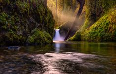 Punchbowl Falls by RobertSchmalle river tree green waterfall light trails tree fall Washington Oregon Portland Columbia Gorge Punch Bo Waterfall Lights, Landscape Photography, Nature Photography, Light Trails, Fall Is Here, Tree Forest, Landscape Pictures, Nice Landscape, Beautiful Waterfalls