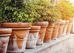 Nuestrasterrazas y balconestambién necesitan sus plantas ornamentales, ya que no hay nada más bonito que unjardín urbanocuajado de flores y verdor