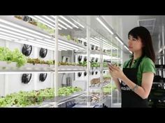 """농업과 IT를 결합한 어그텍크 스타트업 '알래스카라이프', """"화물 컨테이너로 도시형 농장 제공한다"""" - beSUCCESS"""