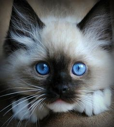 oh those baby blues!!!!