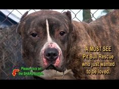 PLEASE WATCH VIDEO!!!! A WAKE UP CALL N COMPLETELY HEARTBREAKING!!!!   Rescuing a Pit Bull who just wanted to be loved.  A MUST SEE!