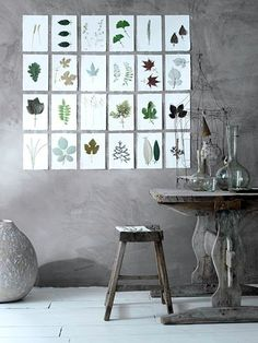 Herbarium-on-the-wall decoration.