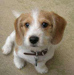 Baxter the Beagle Mix. I seriously want this dog!