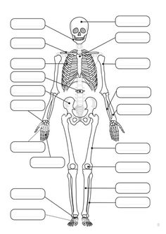 Human skeleton for labelling. girl catching a fish coloring-coloring and co Anatomy Bones, Human Body Activities, Biology Lessons, Human Body Systems, Skeletal System, Human Anatomy And Physiology, Medical Anatomy, Anatomy Study, Study Notes