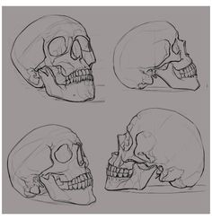 Skull Reference, Art Reference Poses, Drawing Reference, Reference Images, Anatomy Reference, Design Reference, Skull Sketch, Skeleton Art, Skeleton Head Drawing