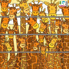 zoekspel giraffen