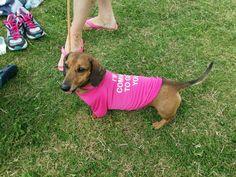 image of a pink sausage dog
