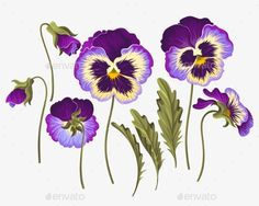 Buy Set Of Pansy Flowers by Greylilac on GraphicRiver. Vector set of pansy flowers, buds and leaves Pansy Tattoo, Flor Tattoo, Tiny Flowers, Purple Flowers, Exotic Flowers, Flowers Garden, Yellow Roses, Pink Roses, Watercolor Flowers