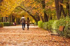El Retiro en otoño/ 5 Things to do in Madrid this Fall