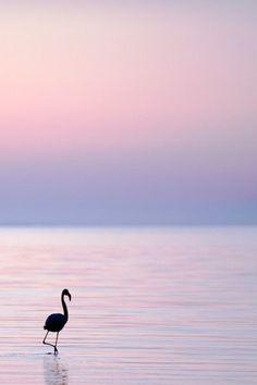 #Flamantrose solitaire sur #couchedesoleil du #suddelafrance #sunset #landscape #France