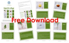 FREE DOWNLOAD – Montessori inspired Parts of a Plant book/cards/posters
