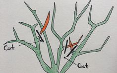 Easy pruning tips for your garden!