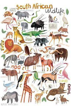 Wonderfull world of Animals