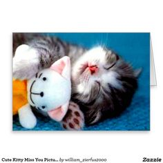 Funny And Cute Animals: Funny Cute Kittens Cute Kittens, Cats And Kittens, Cute Kitten Pics, Cute Cat Sleeping, Sleeping Animals, Sleeping Beauty, Cute Funny Animals, Cute Baby Animals, Funny Cats