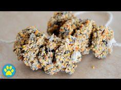 Easy Peasy Seedy Treat For Hamsters! - YouTube