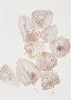 Botanical pure pink white eenvoud
