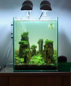 Nano Cube Aquascaping : 20l] Nano Cube Slate Iwagumi AquaScaping World Forum