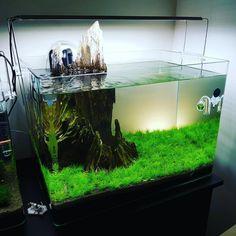 420 Likes, 0 Comments - AquarioGeek (@aquariogeek) on Instagram #TropicalFishAquariumIdeas