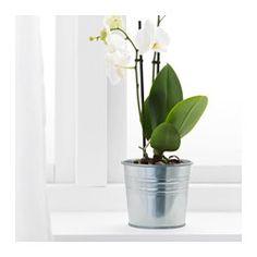 SOCKER Plant pot, galvanized indoor/outdoor, galvanized - IKEA