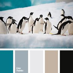 Free collection of color palettes ideas for all the occasions: decorate your house, flat, bedroom, kitchen, living room and even wedding with our color ideas. House Color Schemes, Living Room Color Schemes, Colour Schemes, House Colors, Color Combos, Black Color Palette, Colour Pallette, Turquoise Blue Color, Silver Color