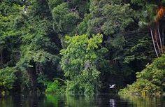 Resultado de imagem para imagens da amazonia