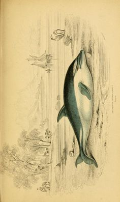 Whales / - Biodiversity Heritage Library