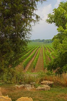 ✮ Vineyard on the Bench