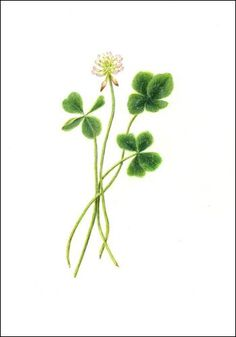 four leaved clover with flower